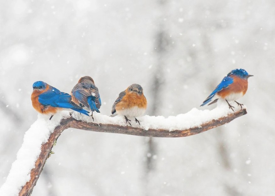 Tips On How To Attract Birds In The Winter for How To Attract Crows