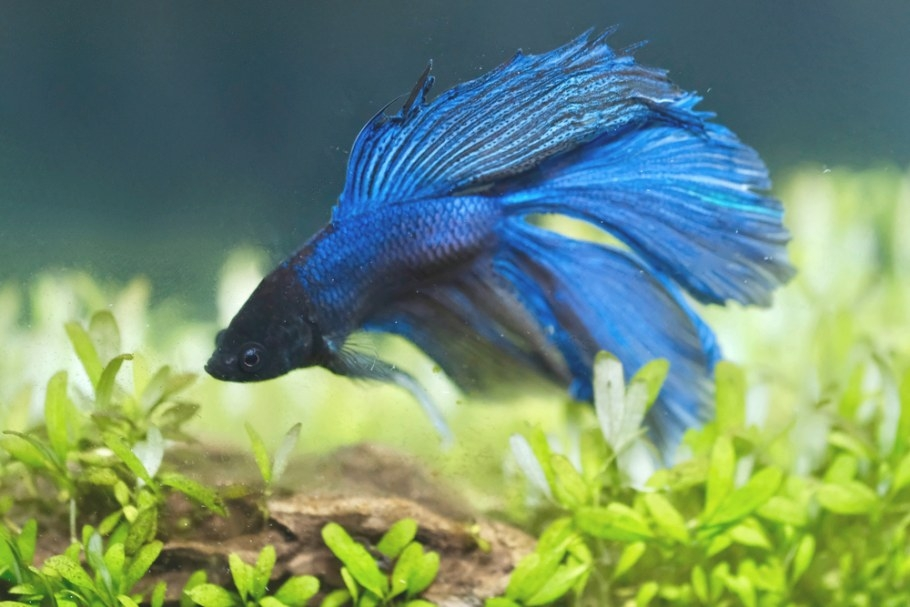Top 10 Best Freshwater Fish For Your Aquarium – Petland Texas throughout Betta Fish Not Eating