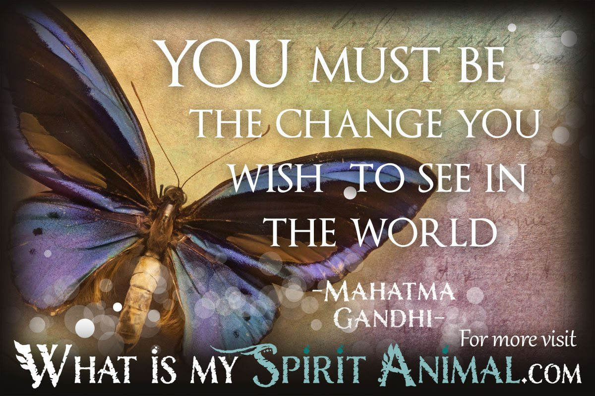 Quotes About Butterflies 1