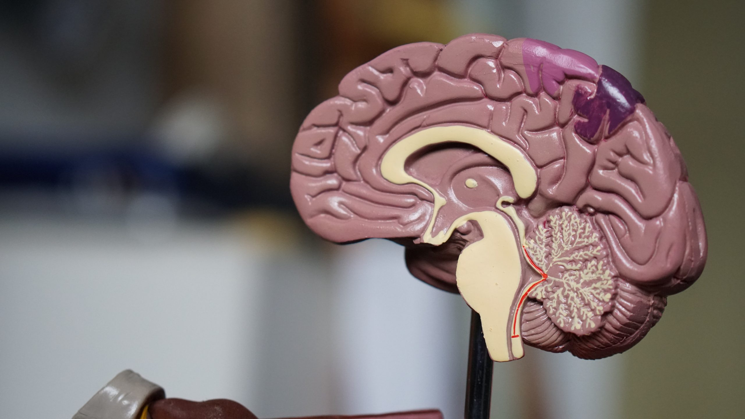 Left Brain and Right Brain Conflict Resolution