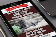 The Five Most Common Cane Corso Training Mistakes and How To Avoid Them And End Up With Your Dream Dog