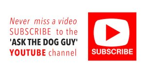 Subscribe To The Ask The Dog Guy YouTube Channel