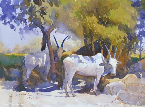 bullock-at-rest-watercolor-painting-by-abel-28x38-cm