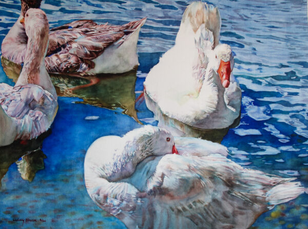 DUCKS 22x15 inches Watercolor on paper