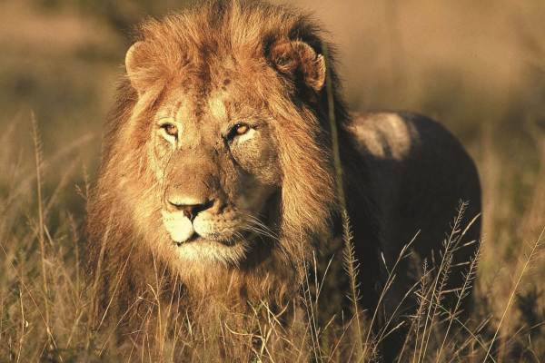 Kruger Park & Victoria Falls Accommodated Tour