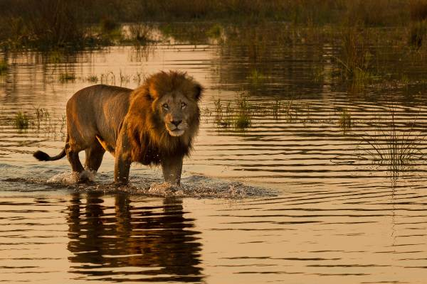 Namibia, Botswana and Victoria Falls Lodge Safari