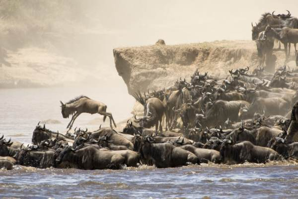 Kenya and Tanzania Wildlife Reserves Tour Package