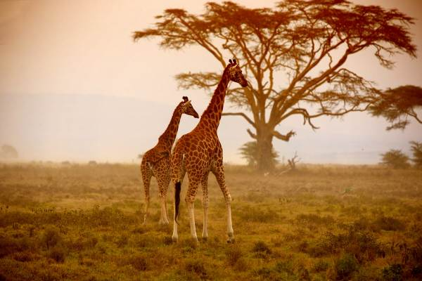 Nairobi to Cape Town via Victoria Falls Tour - Budget Package