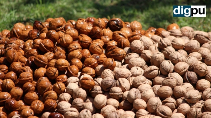 Walnut cultivators in Kashmir hope for govt's market intervention - Kashmir News -DilPaziir -Digpu
