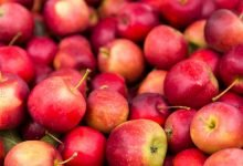 Innovates supply chain for apple fruit in J&K