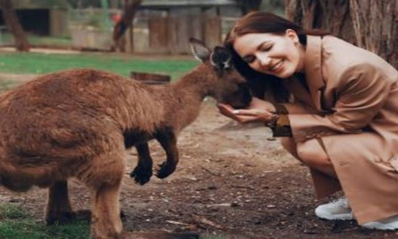 Kangaroos can communicate with humans-Digpu