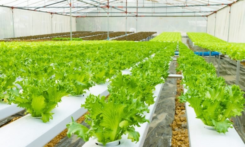 Gujarat teacher turns agriculturist with terrace farming