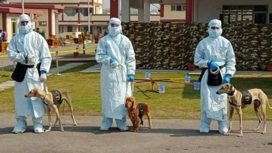 Indian Army demonstrates the capabilities of dogs to detect COVID-19