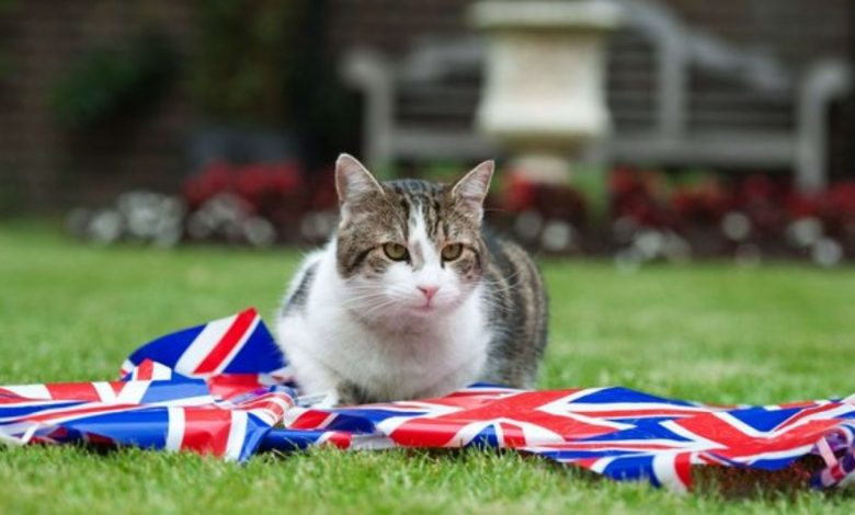 UK's chief mouser Larry celebrates 10 years at No 10 Downing Street