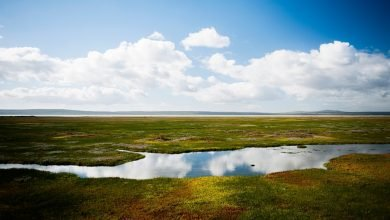 February 2nd: World Wetlands Day - Theme and Significance - Digpu