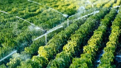 Standard digital camera, AI to monitor soil moisture for affordable smart irrigation
