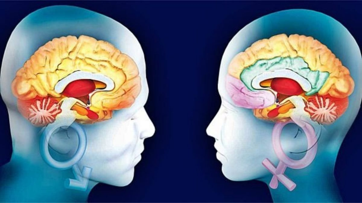 Study reveals differences between men's and women's brains