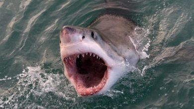 Scientists show technology can save people from shark bites