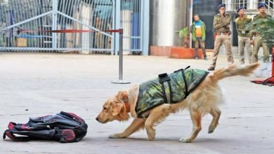 Researchers find with impressive accuracy, dogs can sniff out coronavirus