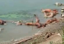 Dead Bodies Floating in the Ganga Paint