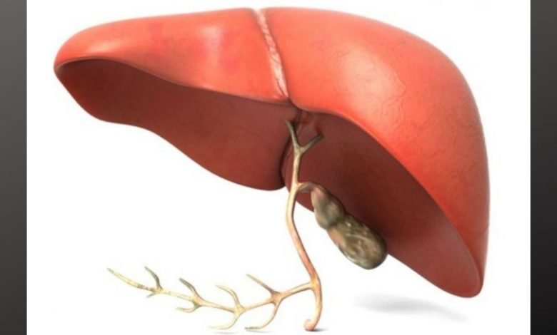 Study finds new weapon in the fight against liver diseases