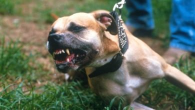 Dogs' aggressive behavior towards humans often caused by fear