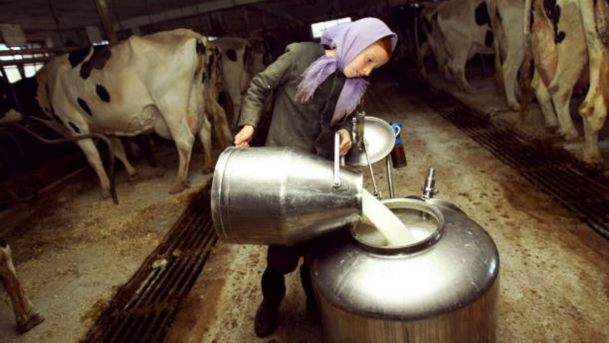 Researcher finds Soybean, linseed oils in cows' diet improve milk quality