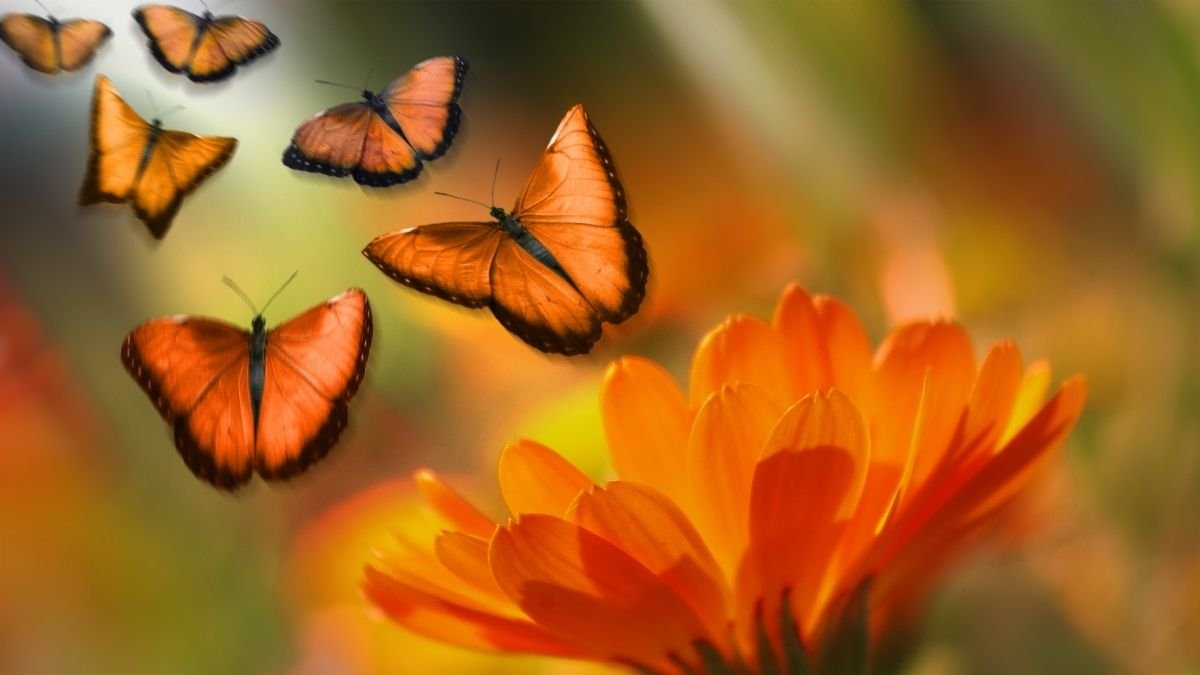 Butterfly species capable of adjusting to a changing climate Study (2)