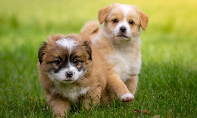 Research Puppies develop social skills to communicate with people shortly after birth (2)