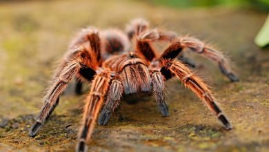 Study says Surprising spider hair discovery may inspire stronger adhesives (2)