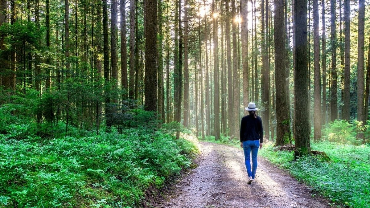 The study finds exposure to nature during COVID-19 lockdown beneficial for mental health
