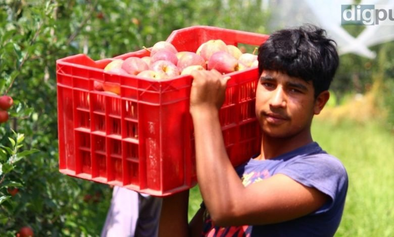 Despite switching to high-density orchards, farmers worried about prices