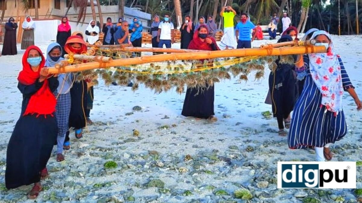 Seaweed farming could aid economic growth in Lakshadweep; initiative driven by CMFRI