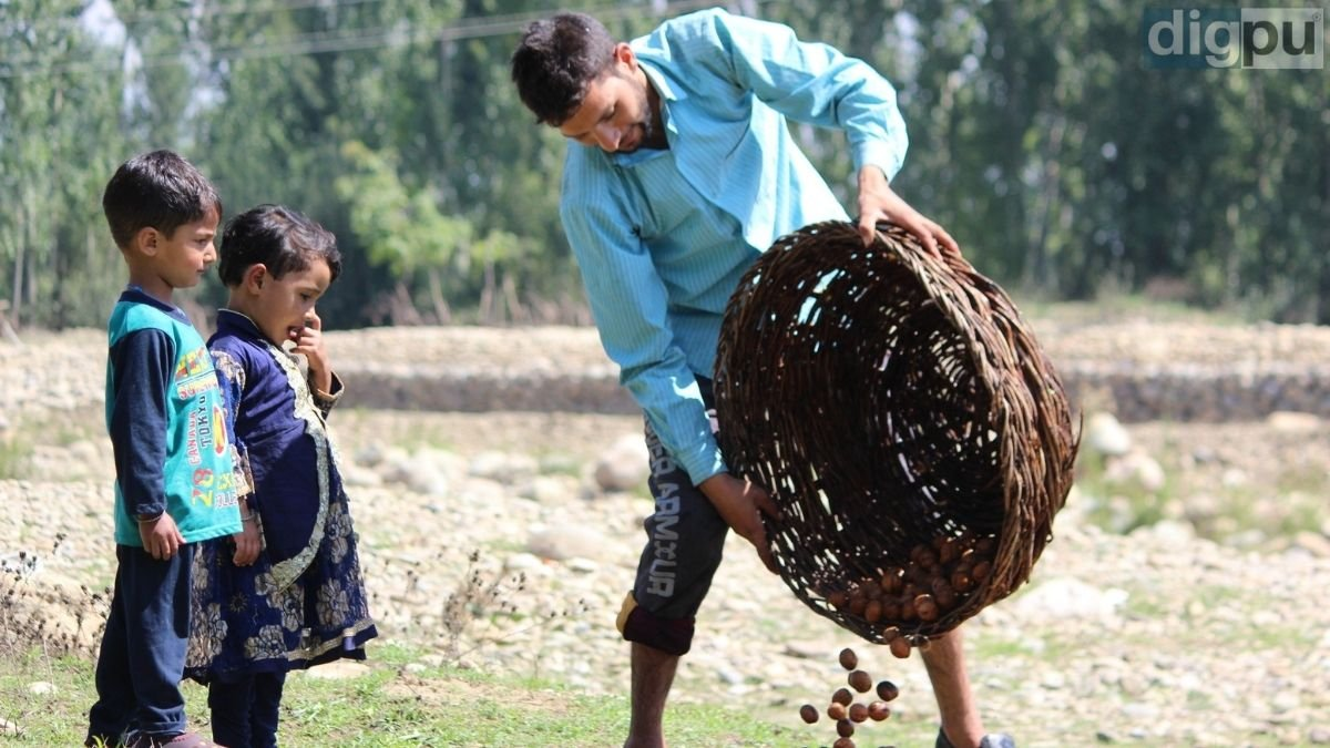 Submerging the wicker in water, grower cleaning walnuts near a stream