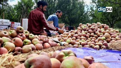 Traditional apple produce is fetching lucrative prices in Kashmir
