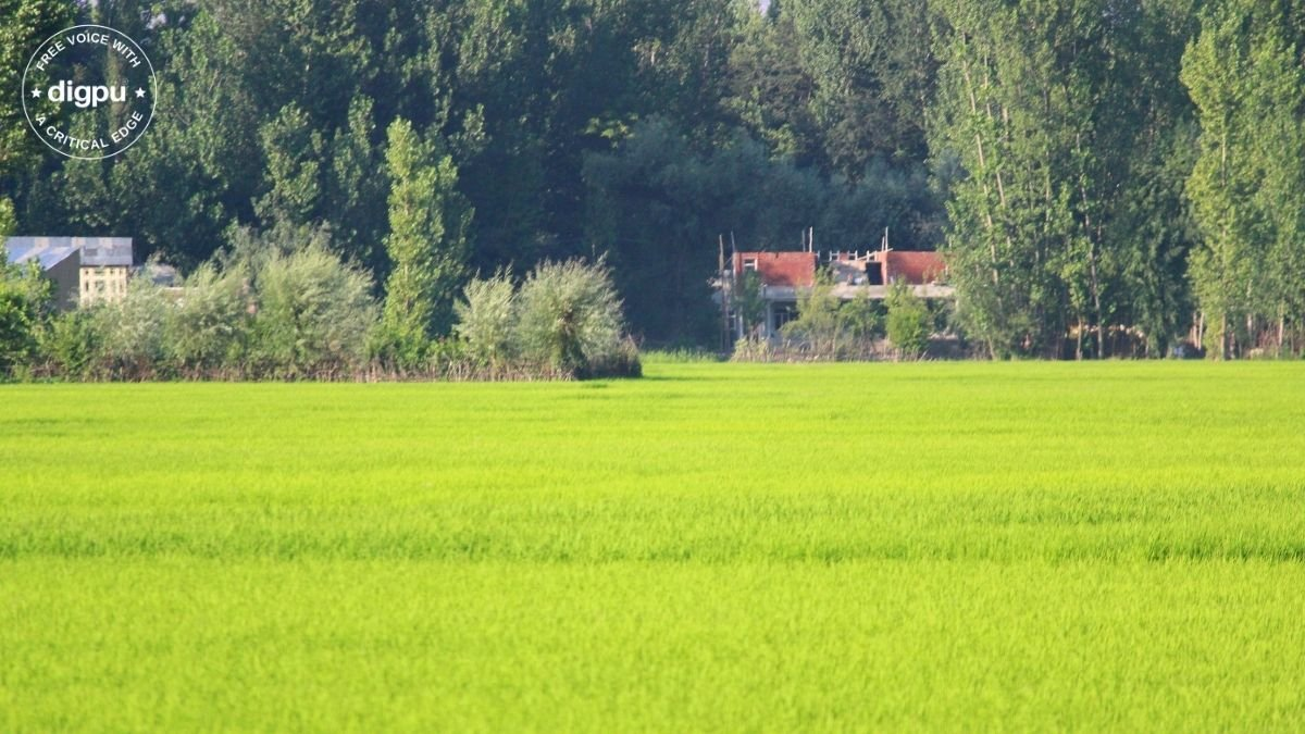 J-K's irrigated agricultural land shrinking at an alarming rate