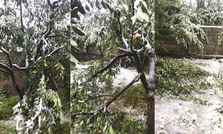 Snowfall in the plains concerns orchardists in Kashmir