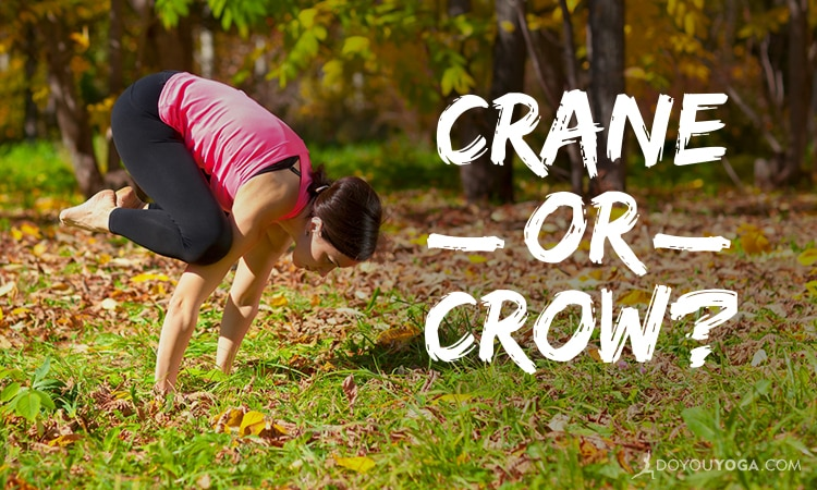 Crane Versus Crow – What's The Difference?