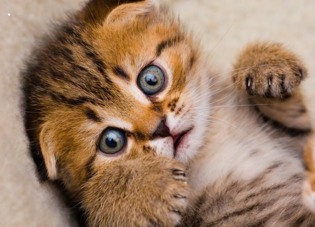How Chaos (And Kittens) Helped Me Find Contentment
