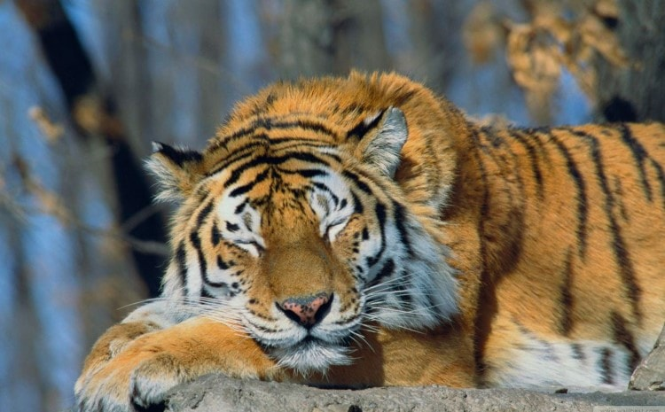 How To Do The Sleeping Tiger And Awaken The Observer Within