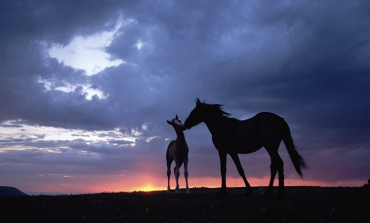 Love Is In The Air – Welcome To The Year Of The Horse