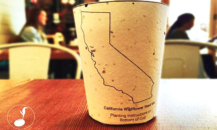 These Plantable Coffee Cups Grow Into Trees