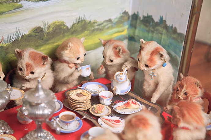 The Kittens' Tea & Croquet Party