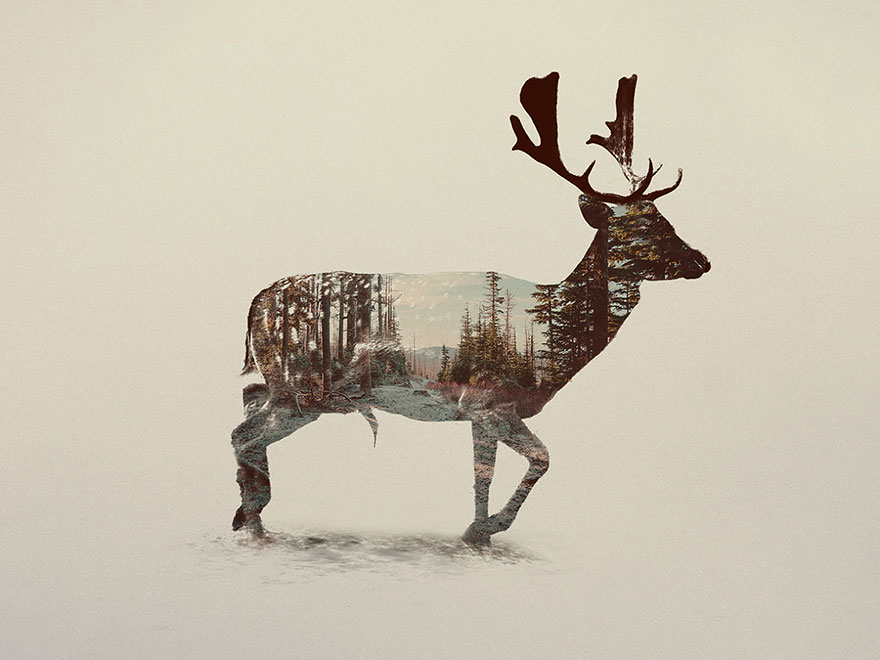 double-exposure-animal-photography-andreas-lie-17__880