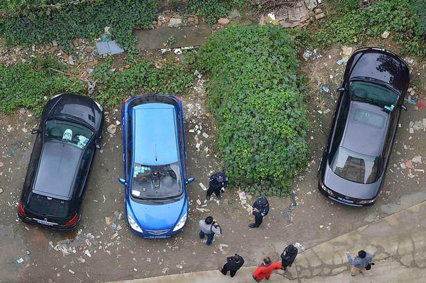 abandoned-car-grows-leaves-4