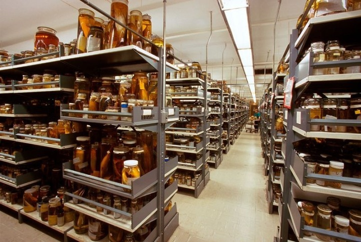 natural_history_museum_collection_3