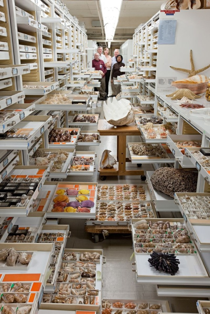 natural_history_museum_collection_5