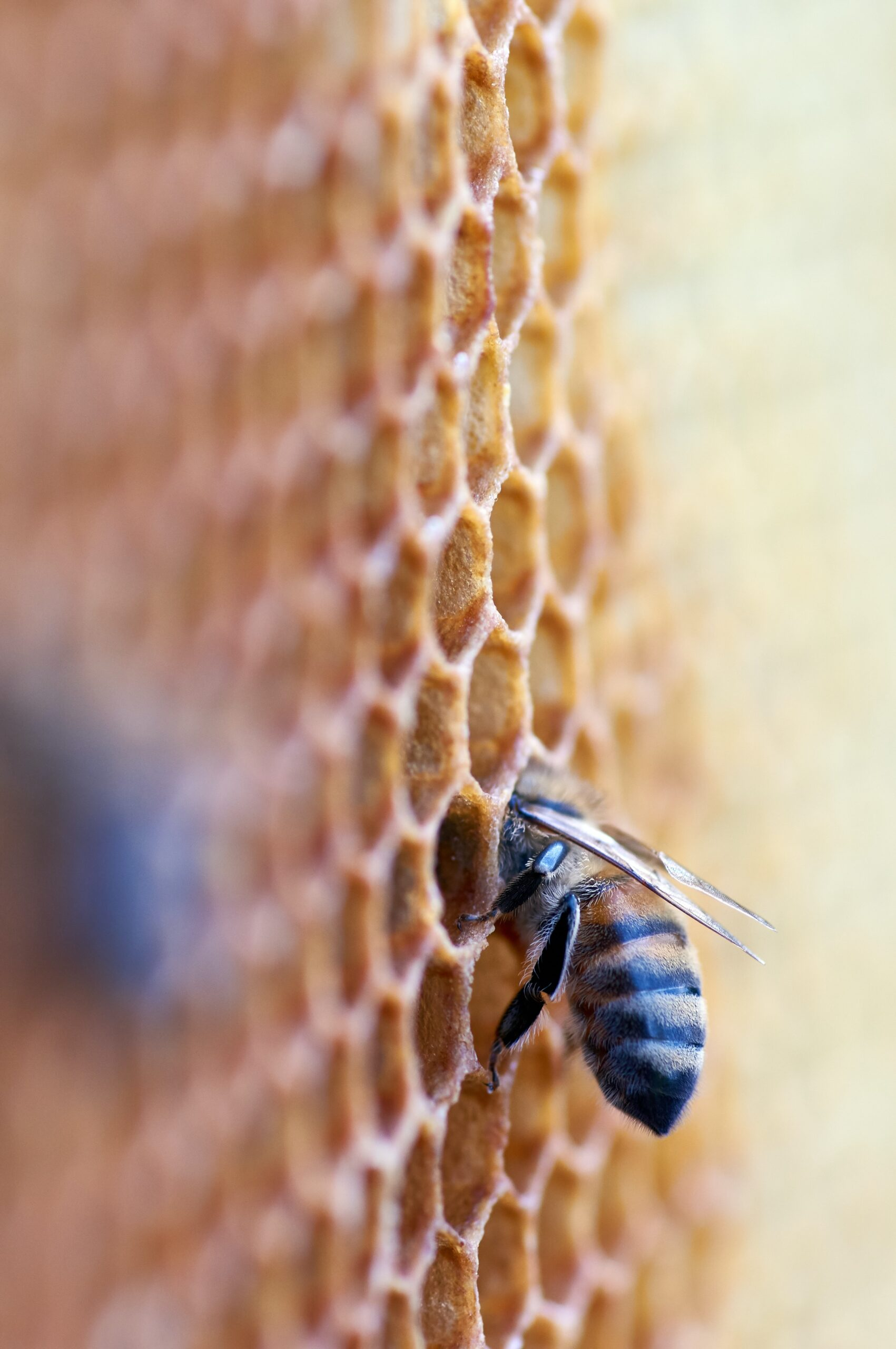the effects of nuclear tests are still in nature, and perhaps influence the current decline of bees