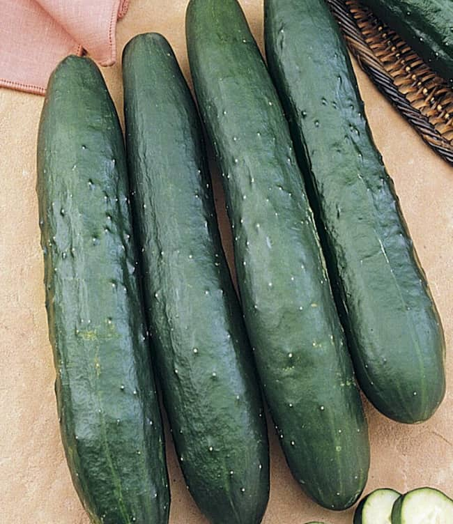 Variety of Cucumbers