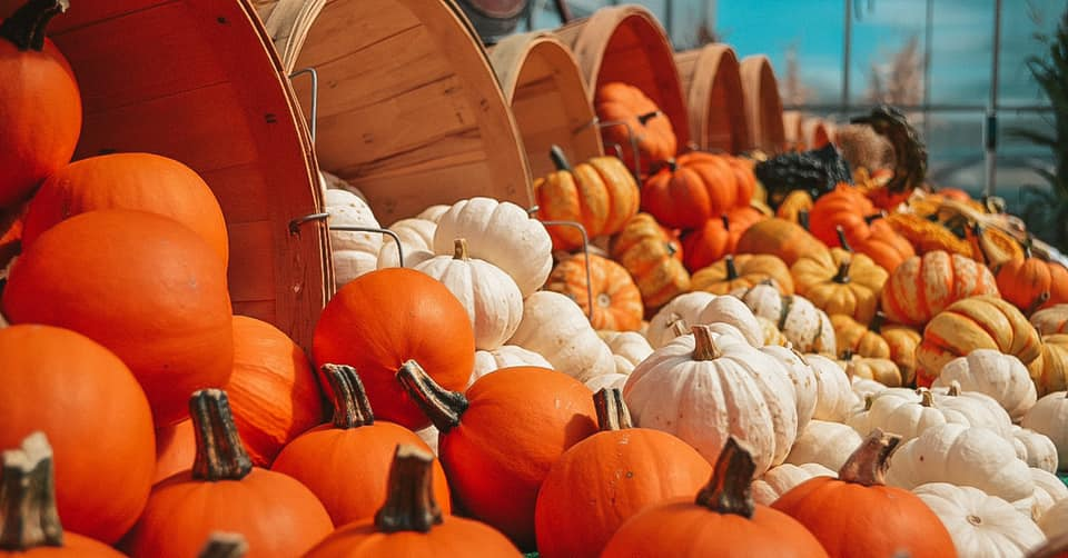 Multi colored pumpkins spilling out of baskets